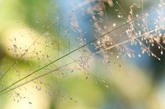 Macro grass with bokeh background Stock Photo