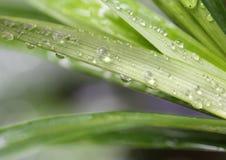 Macro grass drop water. Beautiful macro grass and drop water stock photos