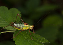 Macro of a grasshoper Stock Photo