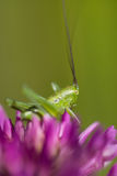 Macro of a grasshopper Stock Photo