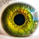 Macro of green eye Royalty Free Stock Photography