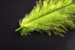 Green feather macro royalty free stock images