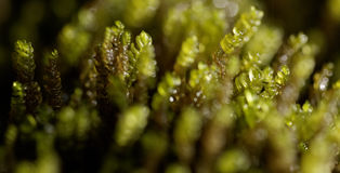 Macro of green grass royalty free stock image