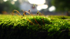 Macro green grass Royalty Free Stock Photo