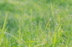 Macro of green grass Royalty Free Stock Photos