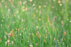 Macro of green grass Stock Photos