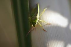 Macro of a green heteroptera bug Stock Images