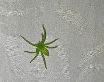 Macro from green hush spider Stock Image