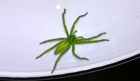 Macro from green hush spider Stock Photos