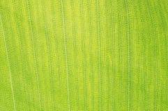 Macro green leaf Stock Photography