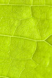 Macro green  leaf Royalty Free Stock Images