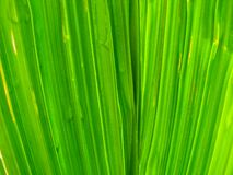 Macro of Green Leaf Stock Images