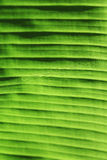 Macro green leaf background Stock Images