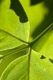 Macro green leaf background Stock Photos