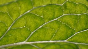 Macro of green leaf Royalty Free Stock Photos