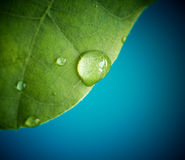 Macro of a green leaf with water drops Stock Photography