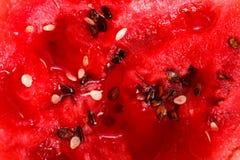 Macro green melon Royalty Free Stock Photo