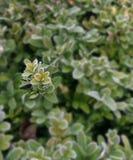 Froast bushes stock photos