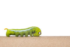 Macro green worm on the paper roll isolated on white. Background Royalty Free Stock Photo