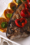 Macro grilled trout on a plate. vertical Stock Photography