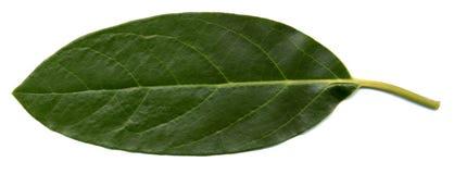 Macro groen blad Stock Afbeelding
