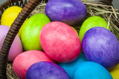 Macro group of easter eggs Stock Image
