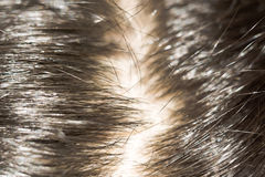 Macro of Hair. Close up of glossy human hair, dark brown color Royalty Free Stock Images