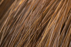 Macro of hair highlights brown. Macro of hair human female highlights brown-haired texture surface use for background royalty free stock photo