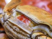 Macro of hairy crabs, chinese cuisine Stock Photos