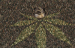 Macro hemp seed in many hemp seeds background Royalty Free Stock Image