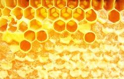 Macro hineycomb with honey. Macro yellow hineycomb with honey Royalty Free Stock Images