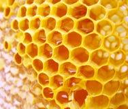 Macro hineycomb with honey Royalty Free Stock Photo