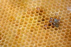 Macro honeycomb background Stock Photography