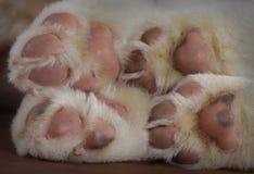 Macro hooves dog Stock Photos