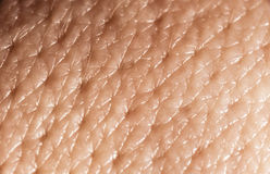Macro humano da pele fotos de stock