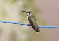 Macro of a hummingbird Royalty Free Stock Photography