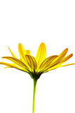 Macro illustration d'une fleur jaune photos libres de droits