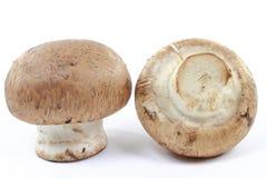 Macro illustration des champignons de couche organiques de Cremini. Images libres de droits