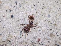 Close up of an ant on the pavement of a sidewalk royalty free stock photography