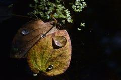 Macro image of autumn leaf in Valbyparken, Copenhagen royalty free stock photos