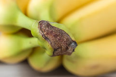 Macro image of bananas Stock Photography