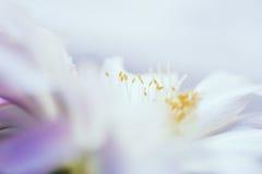 Macro image of beautiful cactus flower Stock Images