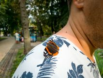 Macro image of beautiful orange butterfly sitting on persons shoulder at park. Macro photo of beautiful orange butterfly sitting on persons shoulder at park stock images