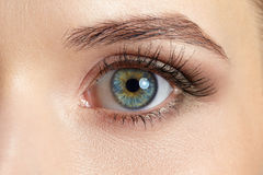 Macro image of beautiful woman eye Stock Photos