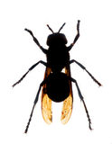 Wasp silhouette Royalty Free Stock Images
