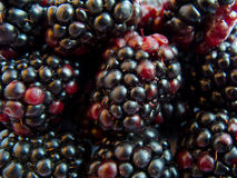 Macro image of blackberry Stock Images