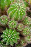 Macro image of cactus bush. Stock Photos