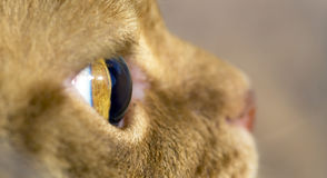 Macro image of cat's eye side view Royalty Free Stock Photos