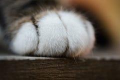 Macro Image of Cat's Paw on Wood Royalty Free Stock Photos