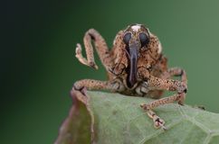 Macro image of a cute weevil on green leaf stock photos